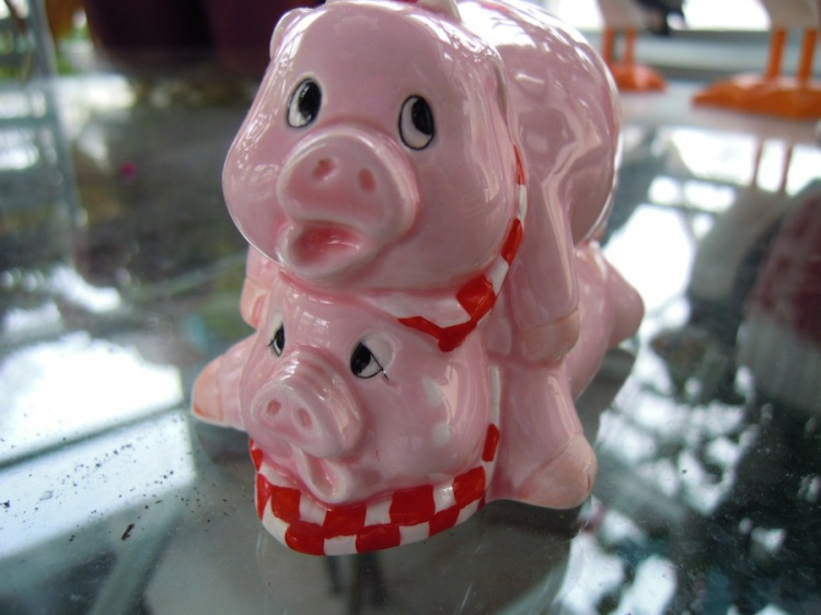 two pigs front on